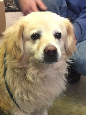 Adopt Fozzie On Dog Boarding Near Me Dogs Cute Dogs