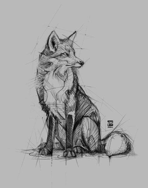 fox sketch #fox #sketch #foxillustration #foxtattoo ideas
