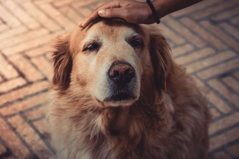 Senior Dog Care: What you need to know