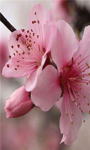 Sfondi di fiori per whatsapp