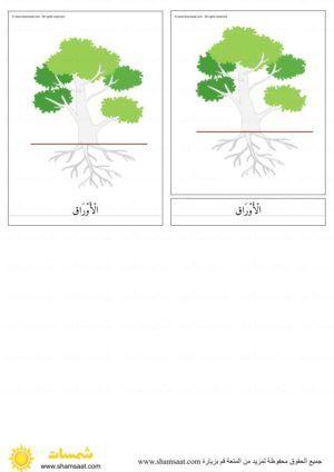 اجزاء الشجرة بطاقات مطابقة مكونة من ثلاثة أجزاء بزل الشجرة 3 Herbs