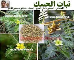 فوائد نبات الحسك لعلاج