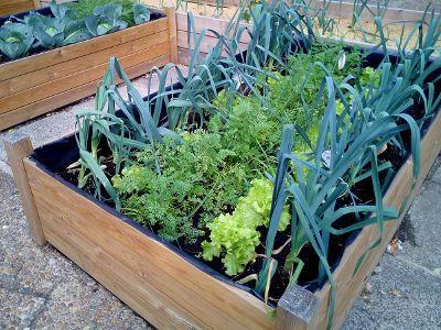 Ogrod Warzywny W Skrzyniach Vegetable Garden Planning Vegetable Garden Design Backyard Vegetable Gardens