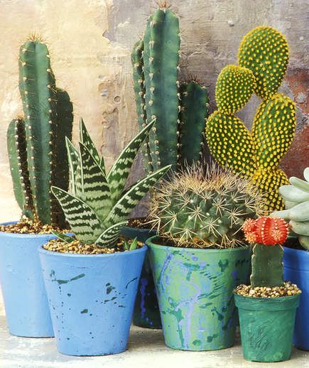 14 Hardy Houseplants That Will Survive The Winter Small Cactus