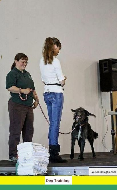 Clicker Training Dogs Video Dogtraining And Potty Training