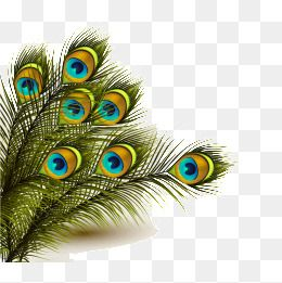 Peacock Feather Png And Clipart Peacock Art Hand Painted Peacock Feathers