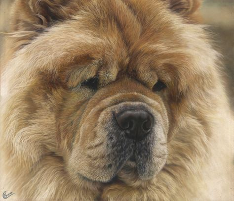 I Was Asked To Paint Kobe The Chow Chow As A Surprise Present For