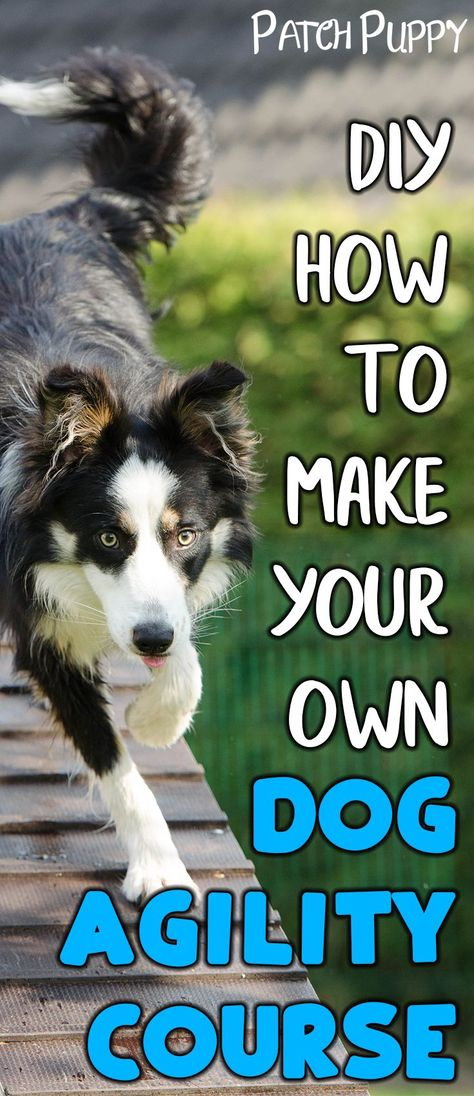 Make Your Own Dog Agility Course and save money on agility training! Agility is fun exercise for your dog's mind and body.