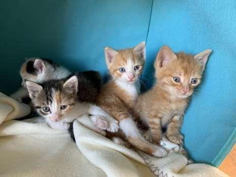 Kitten Zu Vergeben Hauskatze Bauernhofkatze Hauskatze Katzen Tiere