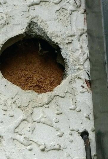 Repairing Large Holes In Concrete Walls In 2020 Concrete Wall Concrete Masonry Wall