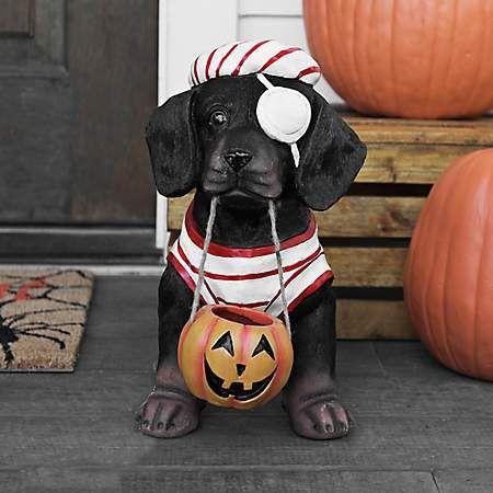 Dachshund Halloween Decorations.Pirate Dachshund Statue Kirklands Halloween Fun Dachshund Halloween