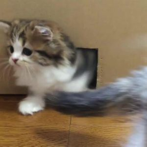 15 Extremely Cute Newborn Kittens We Just Had To Share Kittens Cutest Kitten Pictures Fluffy Kittens