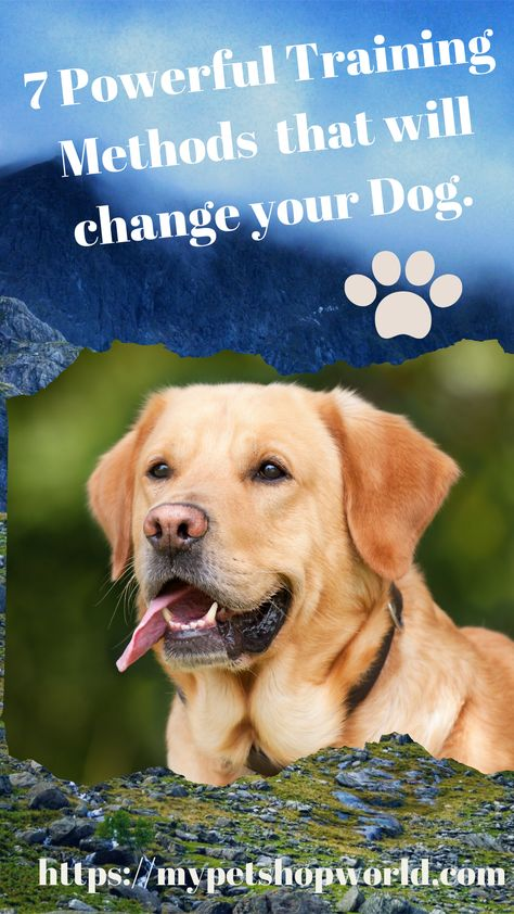 Brain Training For Dogs The Best Dog Training That Is Using The