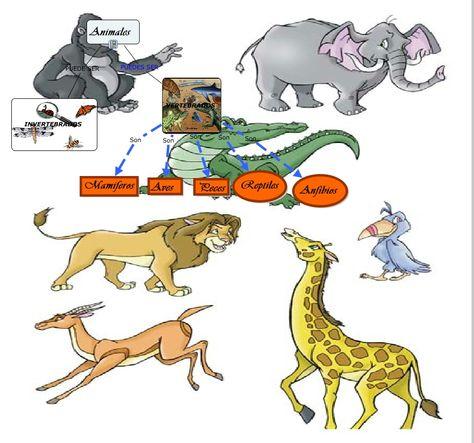 vertebrados  Bing images  vertebrados  Pinterest