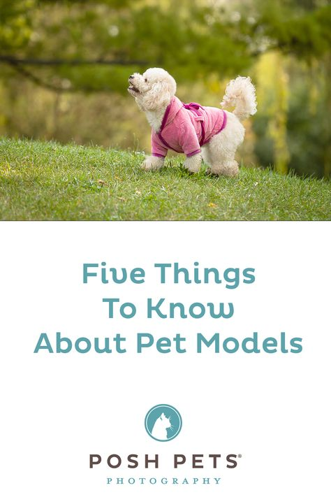 5 things to know about having your dog or cat model in the commercial photography industry. By Posh Pets® Photography. #dogmodel #catmodel #pet #commercialphotography #commercialpetphotographer