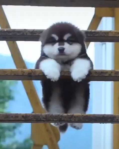 Cute animals, Cute baby animals, Cute funny animals, Cute husky puppies, Super cute dogs, Animals beautiful - Practical Tips & Tools For Looking After Your Dog In A Heatwave -  #Cuteanimals
