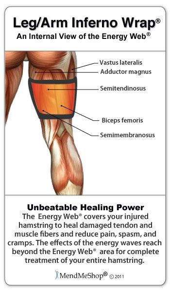 35++ Where is the hamstring located ideas in 2021