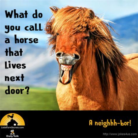 Joke Gallery | | hilarious clean jokes humor #sillyjokes #silly #jokes #hilarious