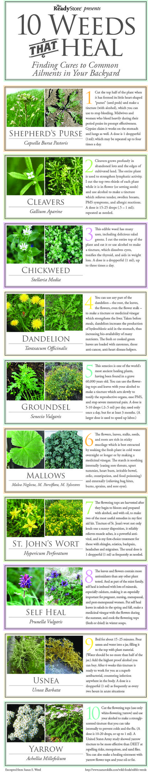 10 common weeds that you find in your yard and how they can heal sicknesses, burns, sores and other ailments.