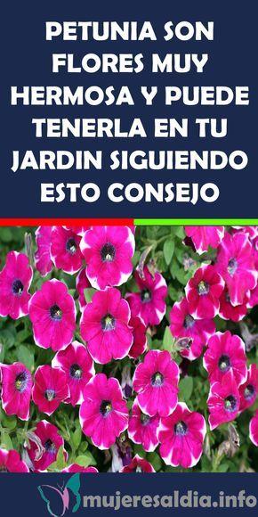 Petunia Son Flores Muy Hermosa Y Puede Tenerla En Tu Jardin Siguiendo Esto Consejo Petunia Flores Hermosa Jardin Patio Terraza Petunias Plants Flowers