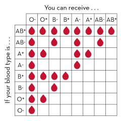 Best 25 blood donor chart ideas on pinterest blood