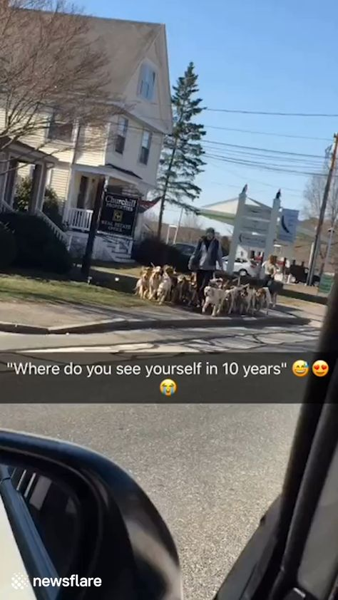 THIS is the amount of dogs I need in my life 😂🐶