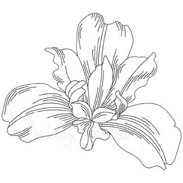 Siberian Iris 5 X 4 4 In Iris Drawing Iris Flower Tattoo Iris Tattoo