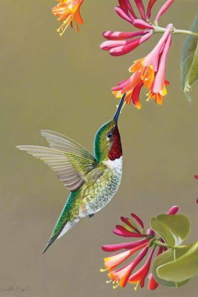 Hummingbird Painting, Hummingbird Tattoo, Tattoo Bird, Raven Tattoo, Arm Tattoo, Sleeve Tattoos, Exotic Birds, Colorful Birds, Pretty Birds