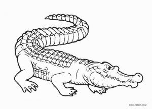 Free Printable Alligator Coloring Pages For Kids Cool2bkids Coloring Pages Animal Coloring Pages Coloring Book Pages