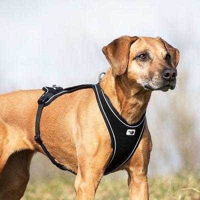 Curli Belka Comfort Geschirr Geschirr Hunde Und Bilder