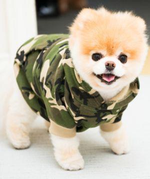Great Boo Army Adorable Dog - 5c425342643e942882b299ba929dcb2b  Perfect Image Reference_928678  .jpg