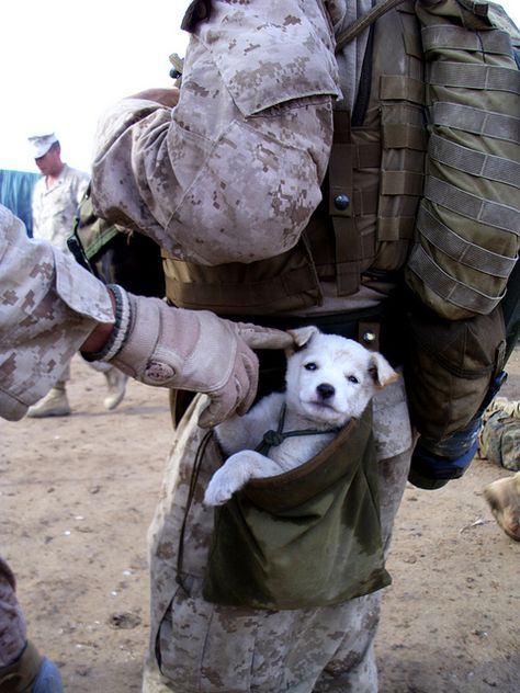 the simple things that get us through...A small puppy wandered up to U.S. Marines from Alpha Company, 1st Battalion 6th Marines, in Marjah, Afghanistan. After following the Marines numerous miles, a soft hearted Marine picked the puppy up and carried the puppy in his drop pouch.  Good for both the dog and the soldier