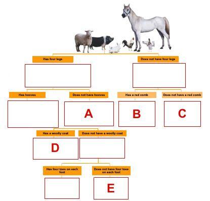 Dichotomous key animal Dichotomous Key