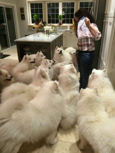Wow! Beautiful dogs. I can't help wondering about the cost of pet insurance, food, and vet bills for that many dogs.