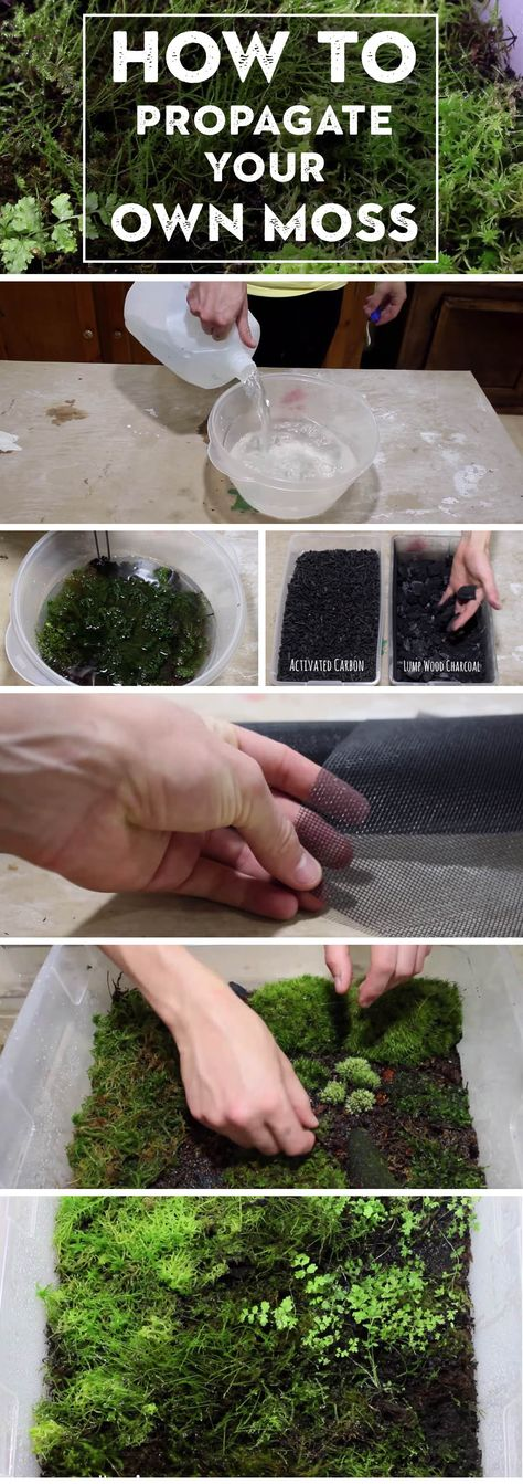 Here's How to Propagate your Own Moss and Add Bright Greens to Your Space!