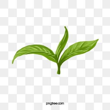 Leaves Png Vector Psd And Clipart With Transparent Background For Free Download Pngtree Leaf Drawing Maple Leaf Drawing Leaf Clipart