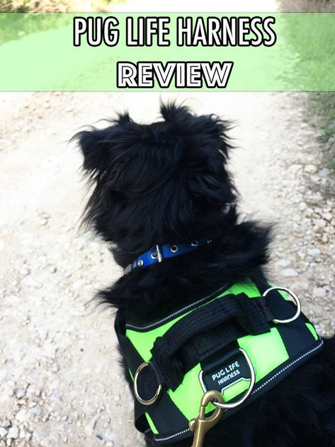 Pug Life Harness Review Should You Buy The Pug Life All In One