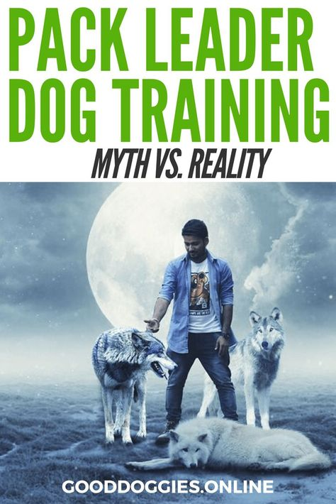 Is Pack Leader Training Legit Dog Training Training Your Dog