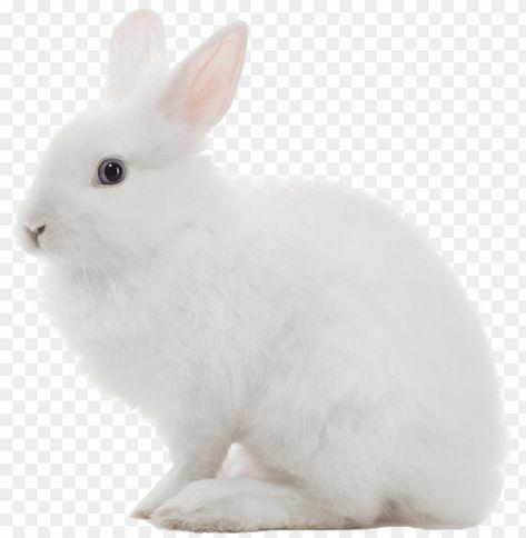 White Rabbit Png Image White Rabbit Transparent Background Png Image With Transparent Background Png Free Png Images Rabbit Png White Rabbit Images White Rabbit