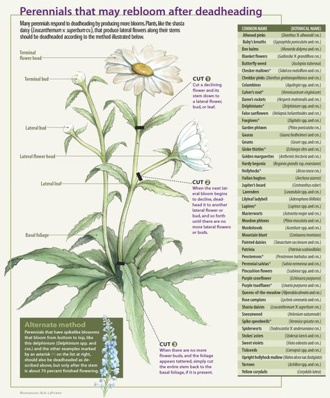 Off With Their Heads: Deadheading Perennials - FineGardening