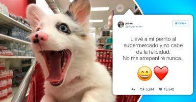21 Divertidos Memes De Perros Que Te Haran Reir A Carcajadas Memes Perros Perros Perro Riendo