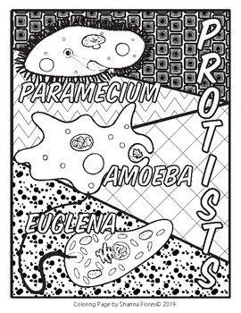 Biology Protists Amoeba Euglena Paramecium Zen Coloring Page