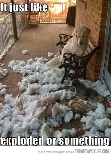 funny dog mess cushion destroyed
