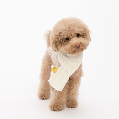 Coteacote Cable Knit Dog Muffler In Cream Dognpet Dog Pet Store Dog Sweaters Puppy Accessories