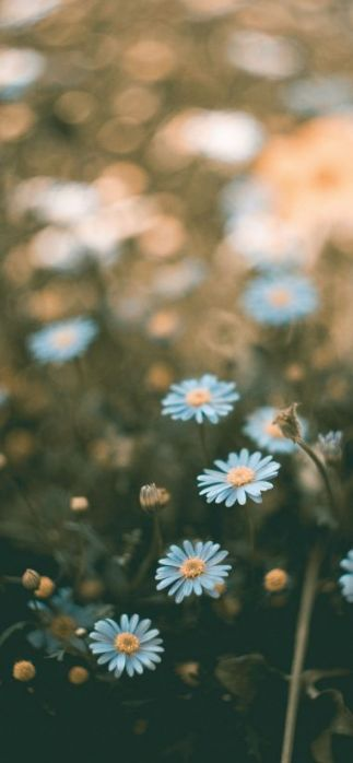 The Reasons Why We Love Flower Wallpaper For Iphone Xr Flower Wallpaper For Iphone Xr In 2020 Flower Iphone Wallpaper Flower Wallpaper 3d Wallpaper Iphone