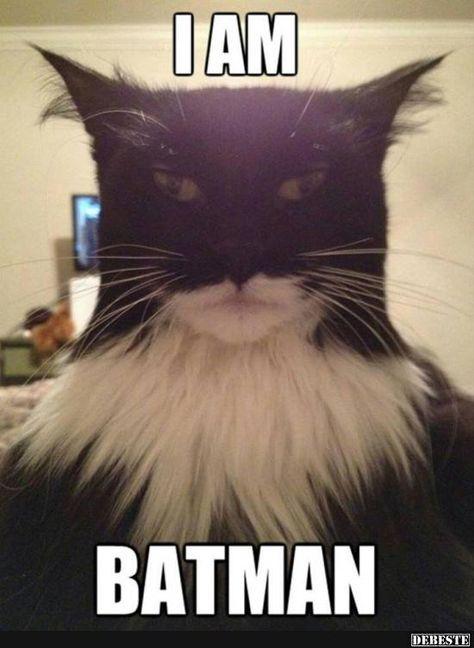 Ich Bin Batman Lustige Bilder Sprüche Witze Echt