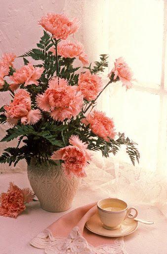 Garofano (m) (Carnation)