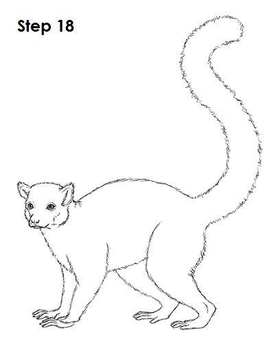 How To Draw A Ring Tailed Lemur Risunki Lemur Risunok