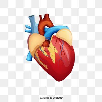Human Creative Human Ecg Medical Png Transparent Clipart Image And Psd File For Free Download Png Natural Logo Clip Art