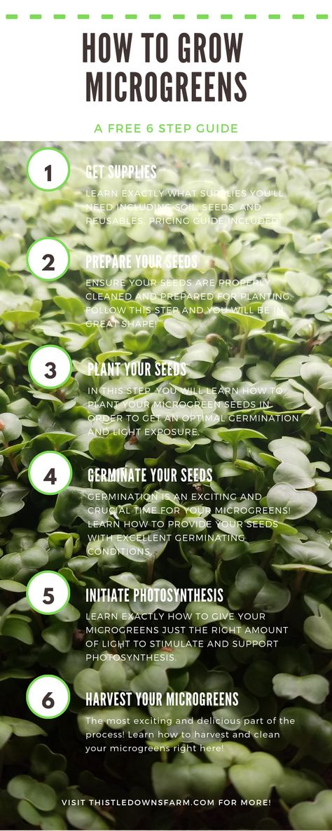 How to Grow Microgreens in 6 Easy Steps!